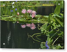 Water Lily Reflections Acrylic Print by Linda Geiger