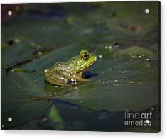 Acrylic Print featuring the photograph Froggy 2 by Douglas Stucky