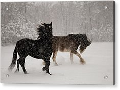 Frolic In The Snow Acrylic Print