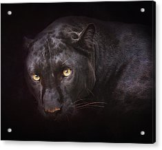 From Darkness Acrylic Print