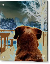 From Her Perspective   Acrylic Print by Steven Digman