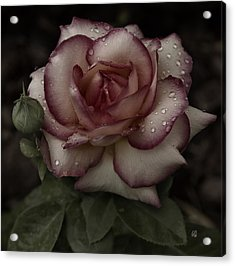 From Me To You Winter Rose Acrylic Print