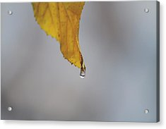 From My Veins Acrylic Print by Laurie Search