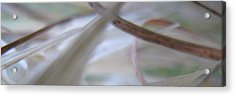 frOm The Opal Valley Pure sol Aria Acrylic Print by Ofer MizraChi