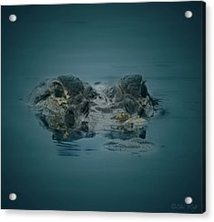 From The Series I Am Gator Number 6 Acrylic Print