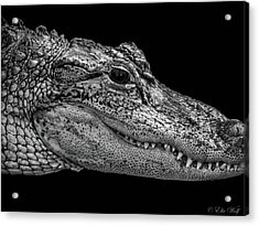 From The Series I Am Gator Number 9 Acrylic Print
