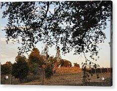 From Under The Trees Acrylic Print