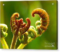 Frond Fern Acrylic Print