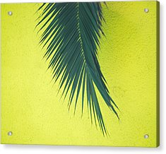 Acrylic Print featuring the photograph Frond by Maggy Marsh