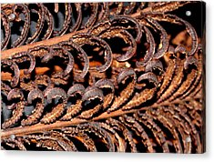 Acrylic Print featuring the photograph Fronds  by Diane Merkle