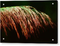 Fronds Forever Acrylic Print by Ross Powell