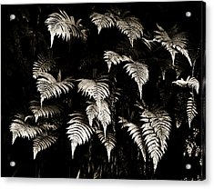 Fronds Acrylic Print by Marilyn Hunt