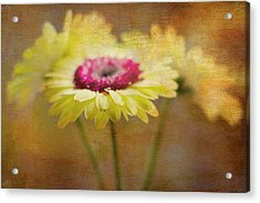 Front And Center Acrylic Print