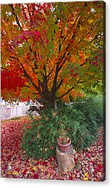 Front Yard Acrylic Print by Bruce Thompson