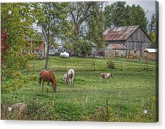 1008 - Front Yard Ponies Acrylic Print
