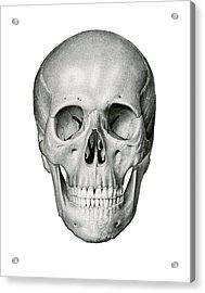 Frontal View Of Human Skull Acrylic Print