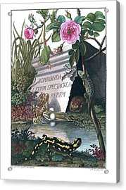 Acrylic Print featuring the drawing Frontis Of Historia Naturalis Ranarum Nostratium by ArtistAugust Johann Roesel von Rosenhof