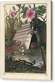 Acrylic Print featuring the drawing Frontis Of Historia Naturalis Ranarum Nostratium by August Johann Roesel von Rosenhof