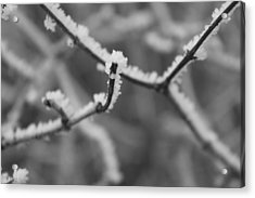 Frost 6 Acrylic Print