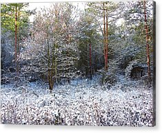 Frost Bite Acrylic Print by Svetlana Sewell