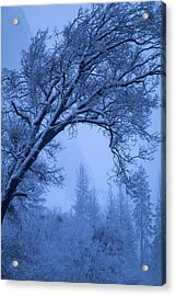 Frost Blue Acrylic Print by Vincent James
