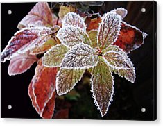 Frost Cluster Acrylic Print