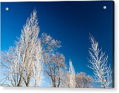 Frost Covered Trees Acrylic Print by Todd Klassy