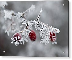 Frost Acrylic Print by Frank Tschakert