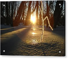 Frost On Sapling At Sunrise Acrylic Print