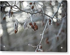 Frost Acrylic Print by Peter  McIntosh