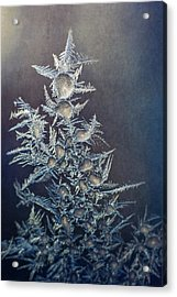 Frost Acrylic Print by Scott Norris
