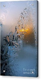 Frost Warning Acrylic Print by Pamela Clements