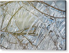 Acrylic Print featuring the photograph Frostbite.. by Nina Stavlund