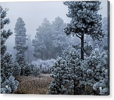 Frosted Acrylic Print by Alana Thrower