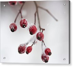 Frosted Berries Acrylic Print
