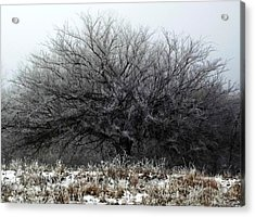Acrylic Print featuring the photograph Frosted Elm by Shelli Fitzpatrick