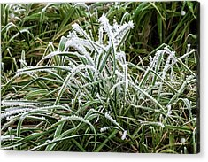 Frosted Grass Acrylic Print