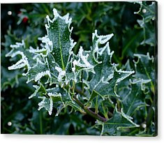 Frosted Holly Acrylic Print by Shirley Heyn