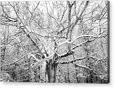Acrylic Print featuring the photograph Frosted by Kendall McKernon