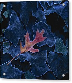 Frosted Leaf And Ivy Acrylic Print