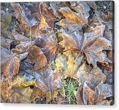 Frosted Leaves 8x10 Acrylic Print