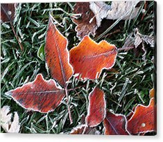 Acrylic Print featuring the photograph Frosted Leaves by Shari Jardina