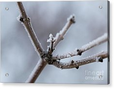 Acrylic Print featuring the photograph Frosted Morning by Ana V Ramirez