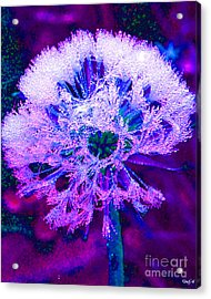 Frosted Acrylic Print by Nick Gustafson
