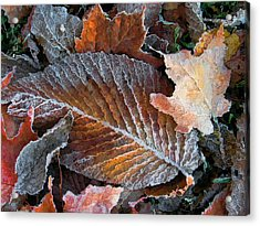 Acrylic Print featuring the photograph Frosted Painted Leaves by Shari Jardina