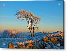 Frosted Tree Acrylic Print by Mark Denham