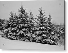 Acrylic Print featuring the photograph Frosted Trees by Kathleen Sartoris