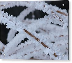 Frosted Twigs Acrylic Print by DeeLon Merritt