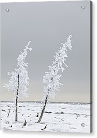 Frosted Twins Acrylic Print by Tim Grams