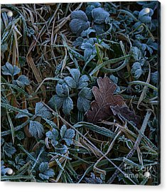 Frostings 4 Acrylic Print